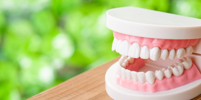 歯周病が認知機能を低下させる? 脳の認知機能と歯の関係
